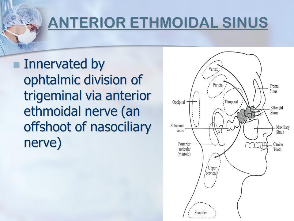 ANTERIOR ETHMOIDAL SINUS