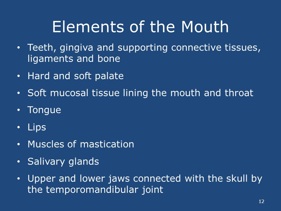 Elements of the Mouth Teeth, gingiva and supporting connective tissues, ligaments and bone. Hard and soft palate.