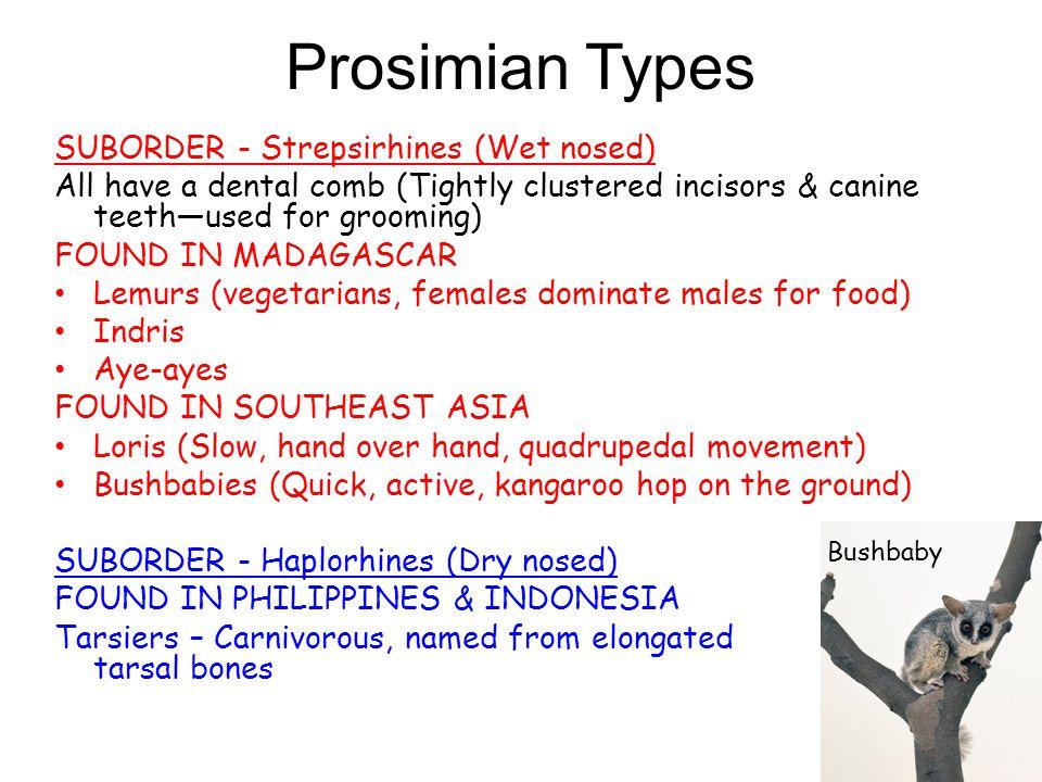Prosimian Types SUBORDER - Strepsirhines (Wet nosed)