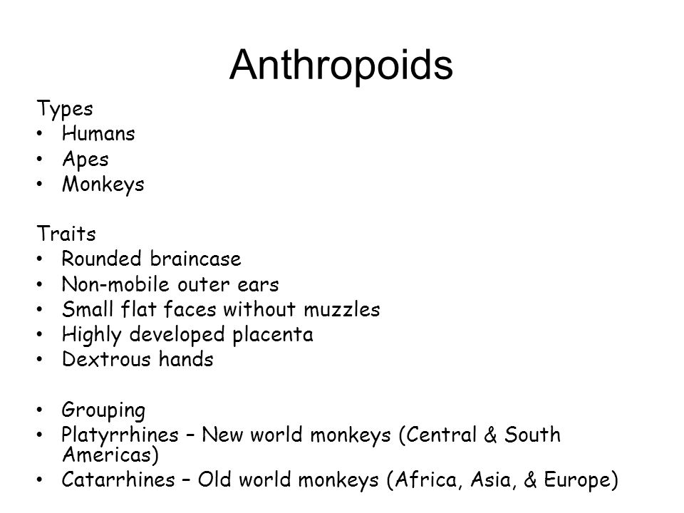 Anthropoids Types Humans Apes Monkeys Traits Rounded braincase