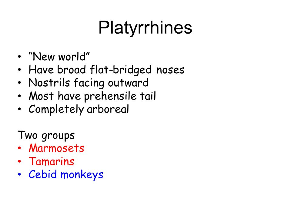 Platyrrhines New world Have broad flat-bridged noses