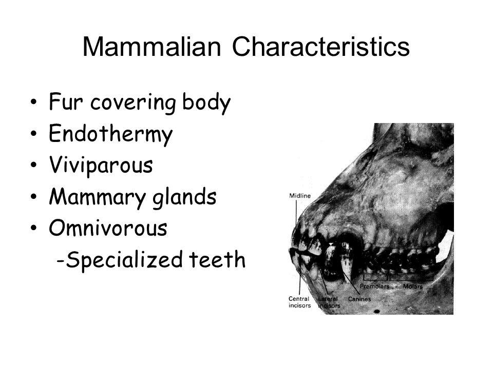 Mammalian Characteristics