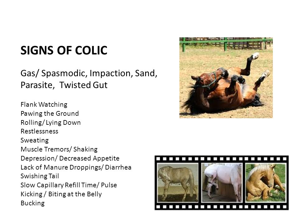 SIGNS OF COLIC Gas/ Spasmodic, Impaction, Sand, Parasite, Twisted Gut
