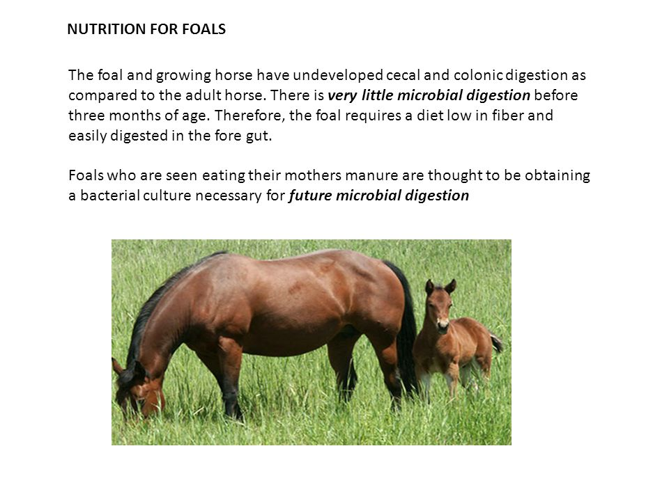 NUTRITION FOR FOALS