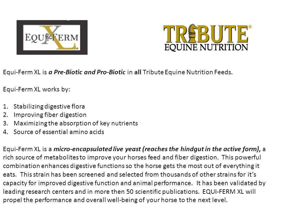 Equi-Ferm XL is a Pre-Biotic and Pro-Biotic in all Tribute Equine Nutrition Feeds.