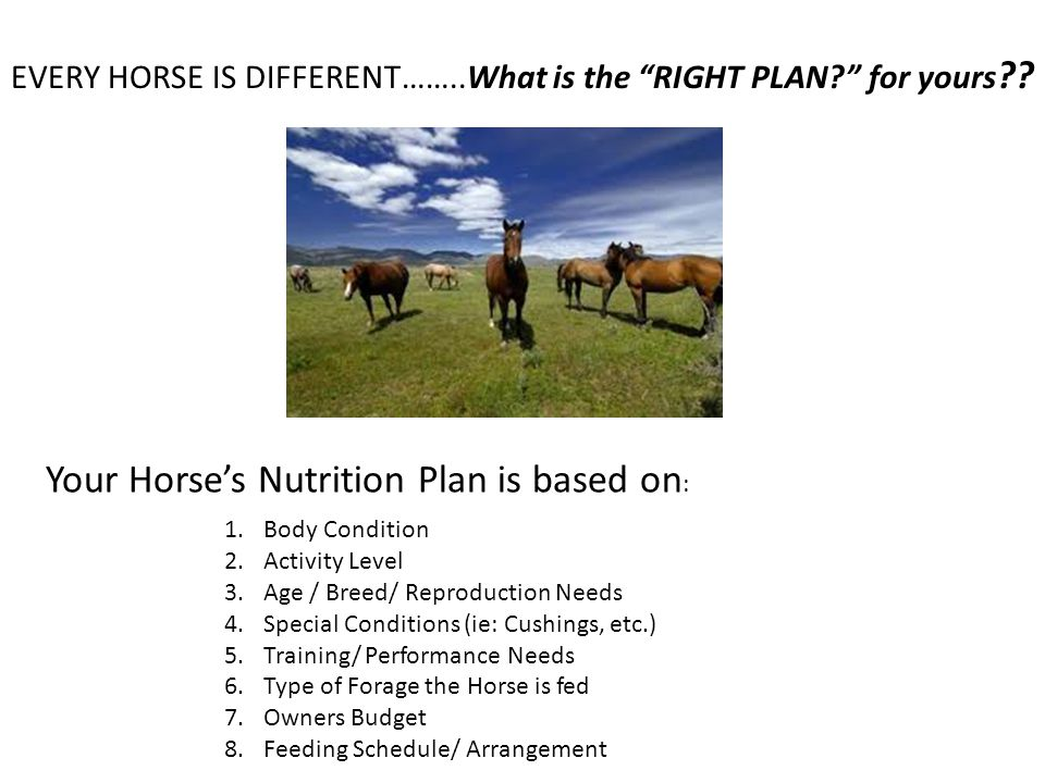 Your Horse's Nutrition Plan is based on:
