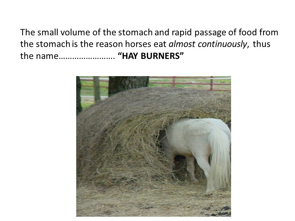 The small volume of the stomach and rapid passage of food from the stomach is the reason horses eat almost continuously, thus the name…………………….
