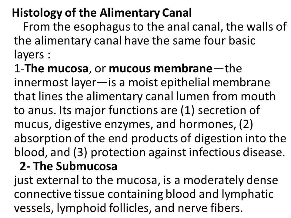 Histology of the Alimentary Canal From the esophagus to the anal canal, the walls of the alimentary canal have the same four basic layers : 1-The mucosa, or mucous membrane—the innermost layer—is a moist epithelial membrane that lines the alimentary canal lumen from mouth to anus.