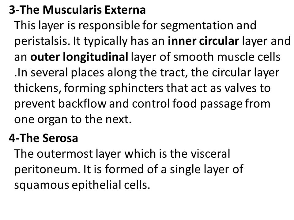 3-The Muscularis Externa This layer is responsible for segmentation and peristalsis.