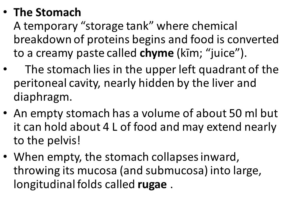 The Stomach A temporary storage tank where chemical breakdown of proteins begins and food is converted to a creamy paste called chyme (kīm; juice ).