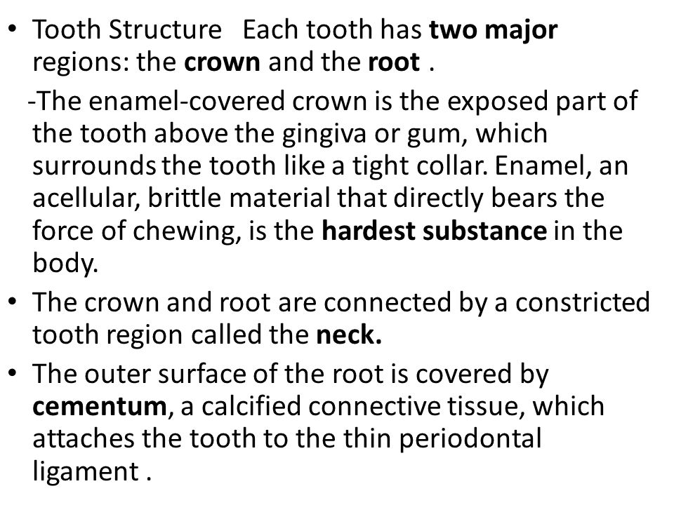 Tooth Structure Each tooth has two major regions: the crown and the root .