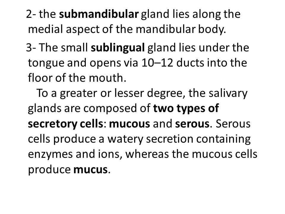 2- the submandibular gland lies along the medial aspect of the mandibular body.