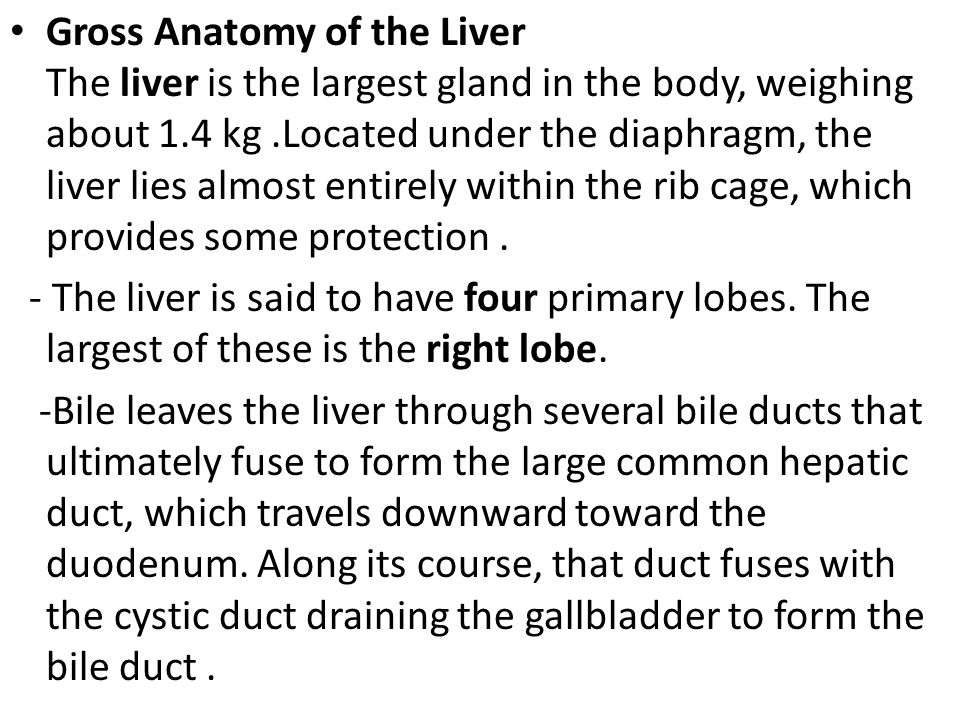 Gross Anatomy of the Liver The liver is the largest gland in the body, weighing about 1.4 kg .Located under the diaphragm, the liver lies almost entirely within the rib cage, which provides some protection .