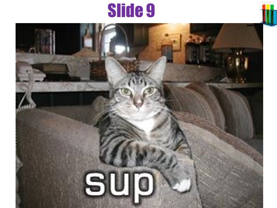 Slide 3 Slide 9 Rate funny pictures on scale of 1 to 10 (1= not at all funny, 10=hilarious)