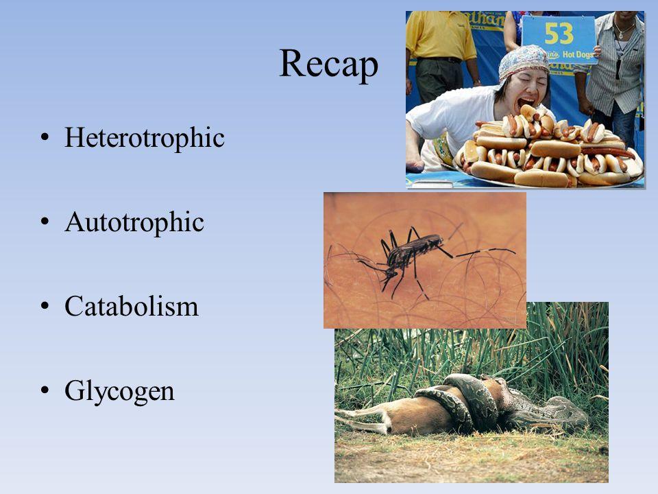 Recap Heterotrophic Autotrophic Catabolism Glycogen