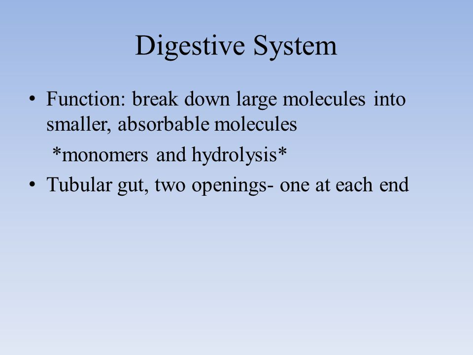Digestive System Function: break down large molecules into smaller, absorbable molecules. *monomers and hydrolysis*
