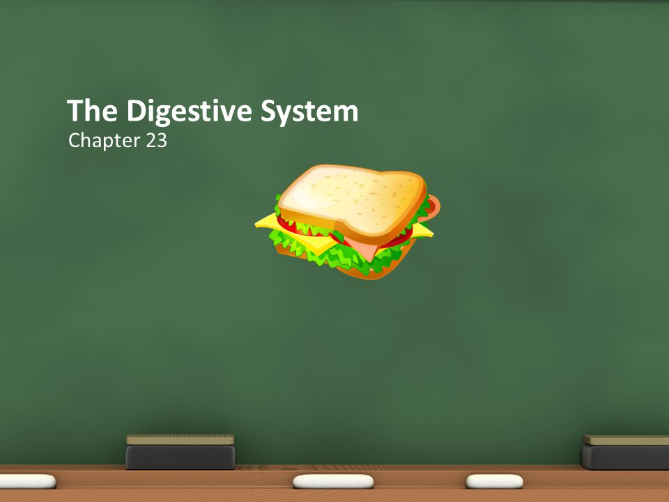 The Digestive System Chapter 23