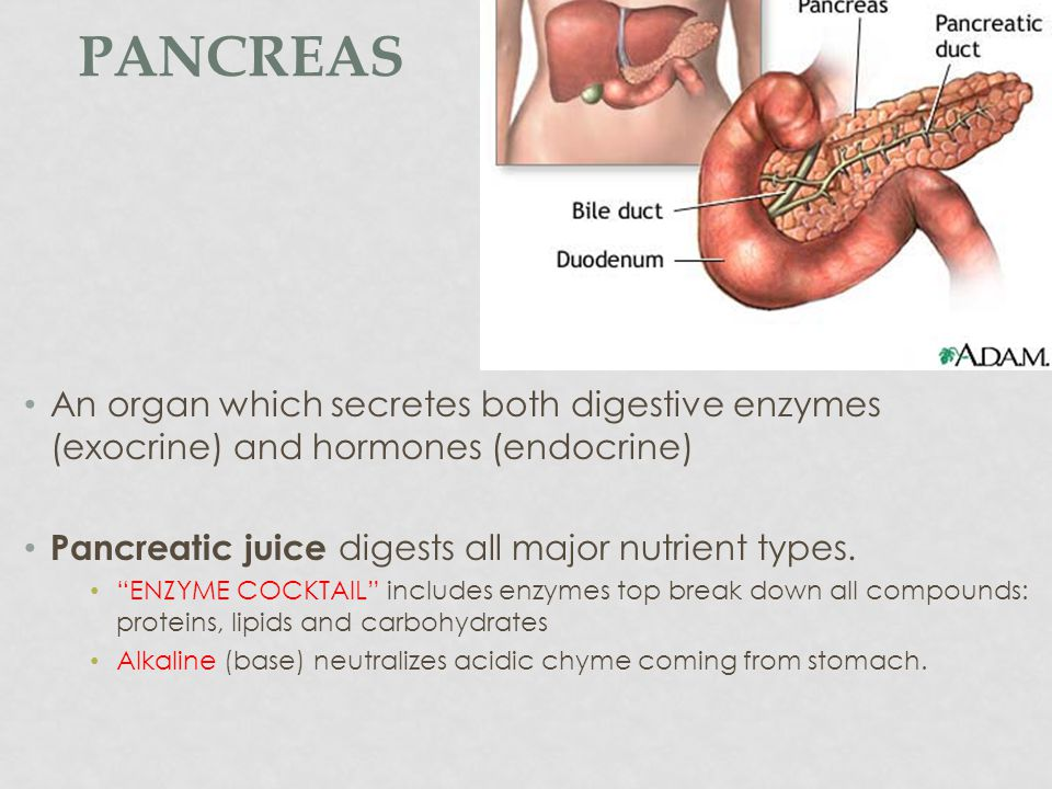 Pancreas An organ which secretes both digestive enzymes (exocrine) and hormones (endocrine) Pancreatic juice digests all major nutrient types.