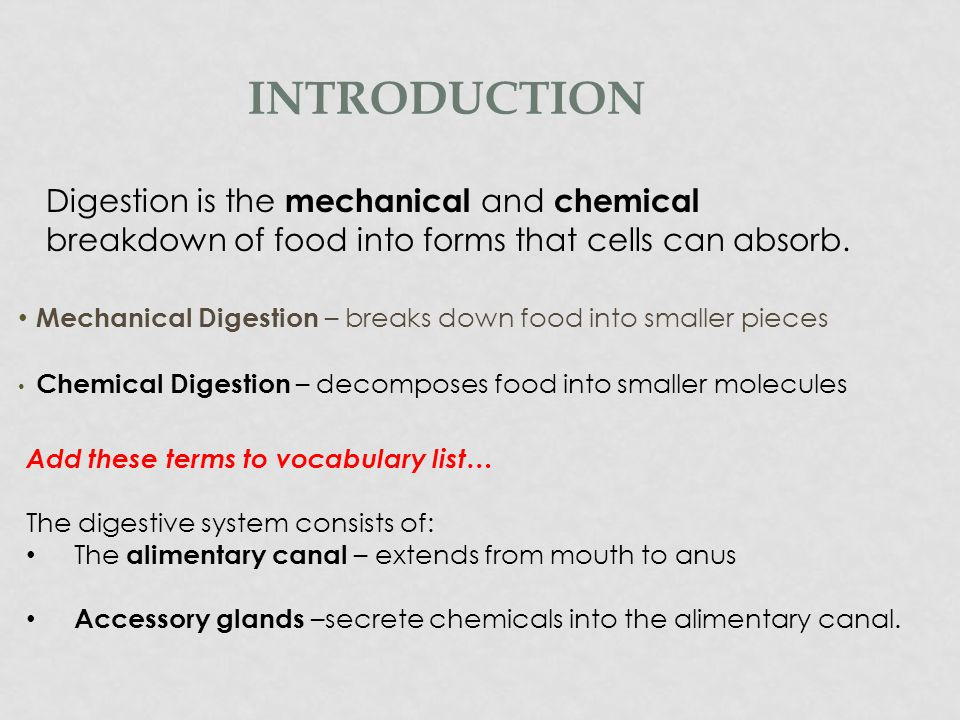 Introduction Digestion is the mechanical and chemical breakdown of food into forms that cells can absorb.