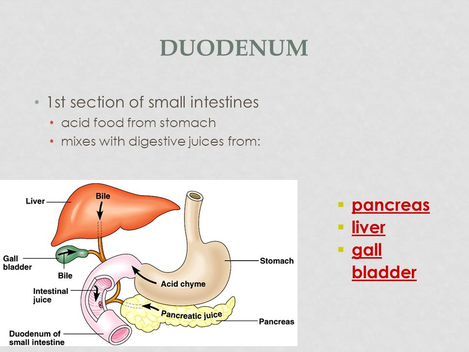 Duodenum pancreas liver gall bladder 1st section of small intestines