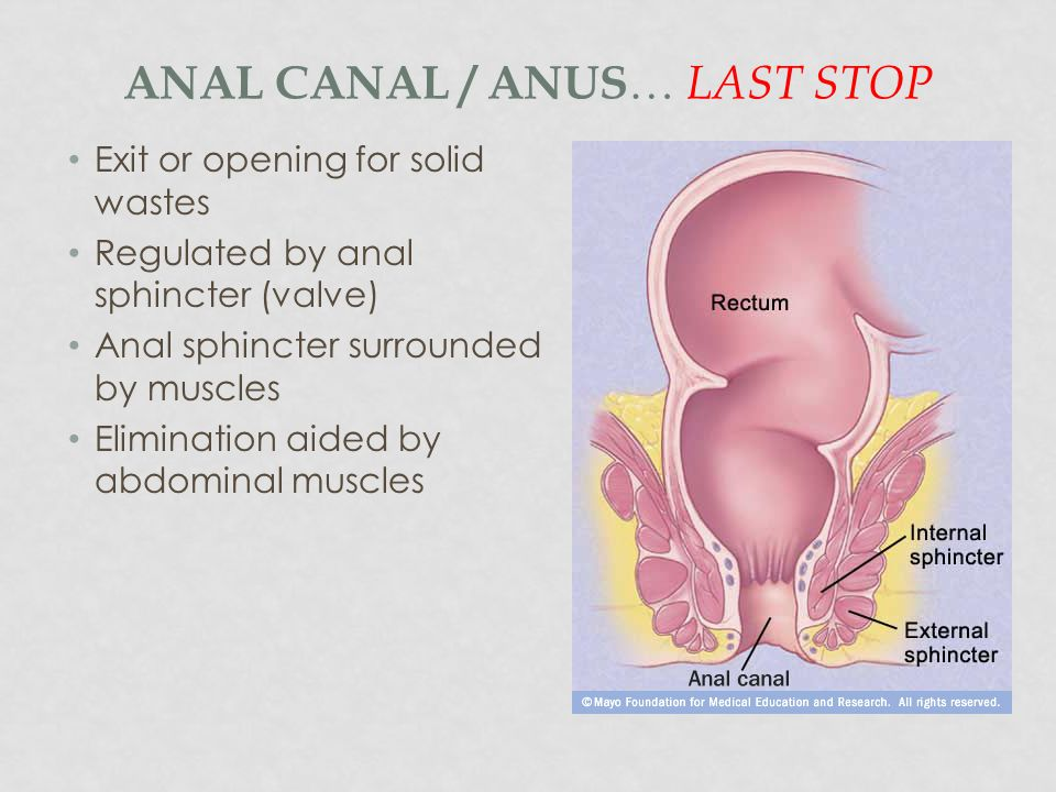 Anal Canal / Anus… Last Stop