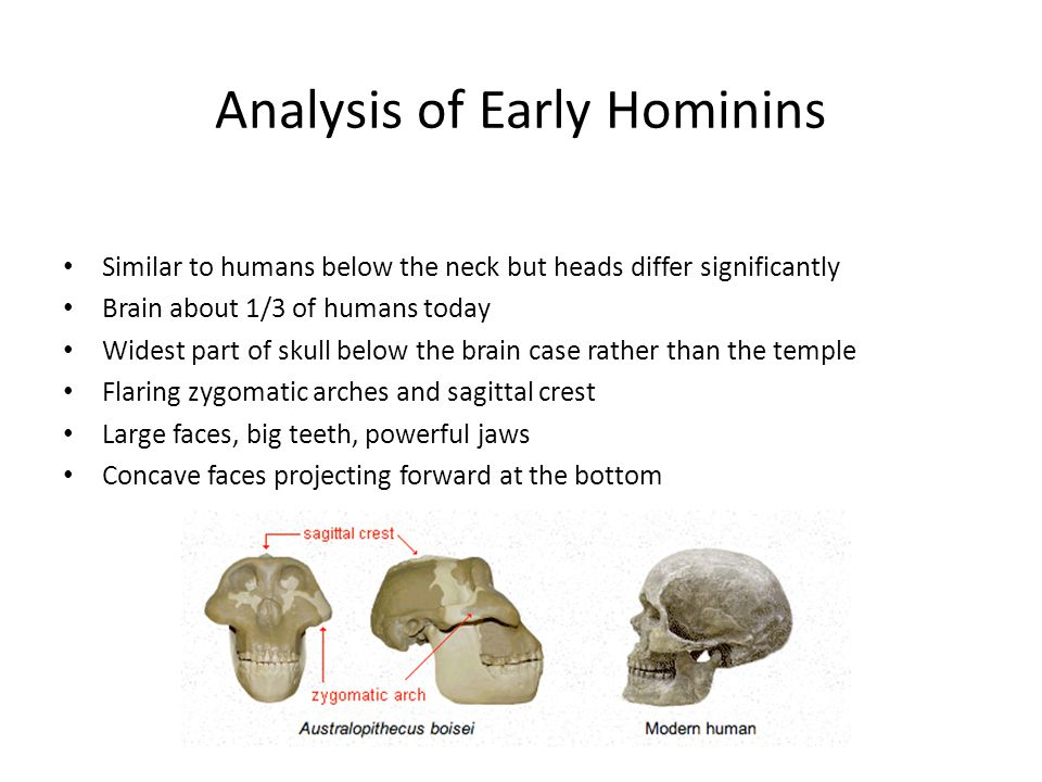 Analysis of Early Hominins