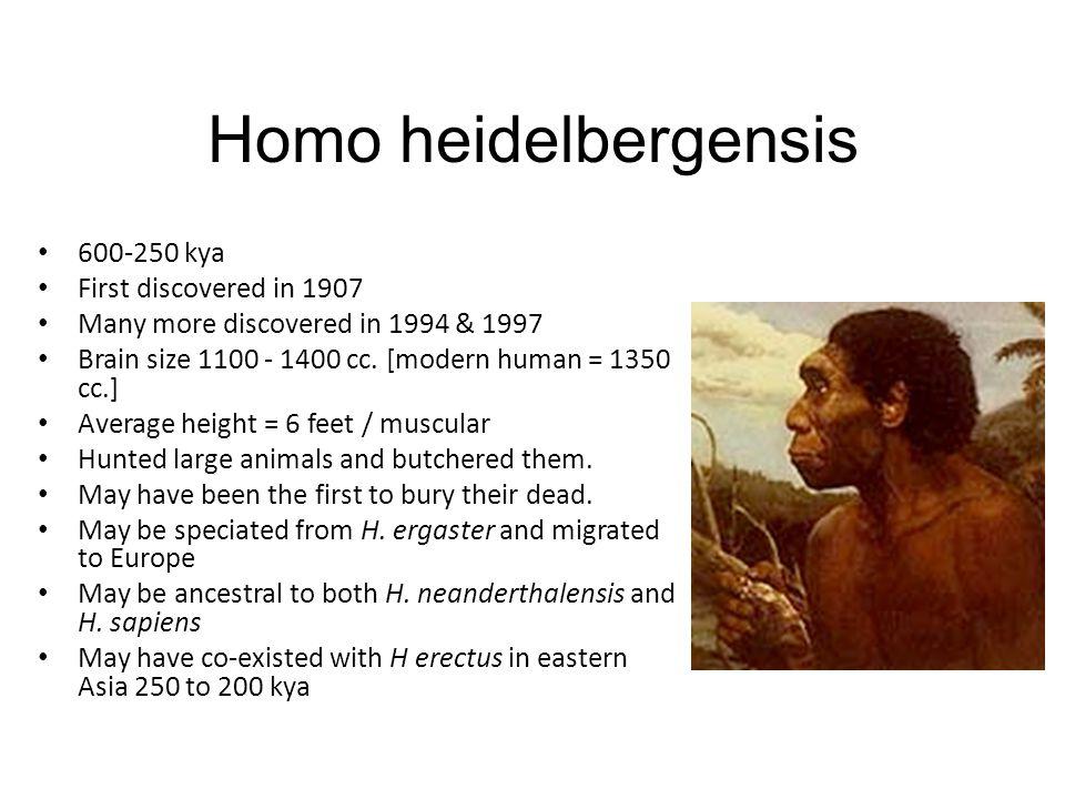 Homo heidelbergensis 600-250 kya First discovered in 1907