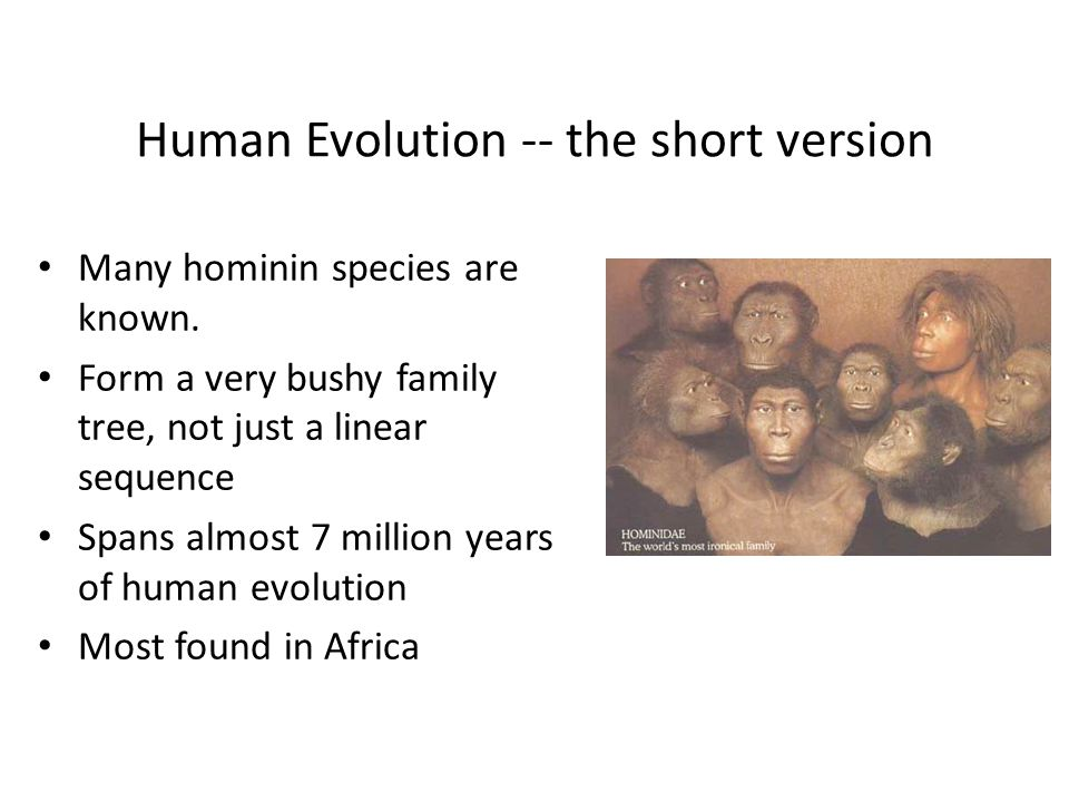 Human Evolution -- the short version