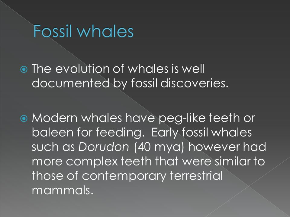 Fossil whales The evolution of whales is well documented by fossil discoveries.