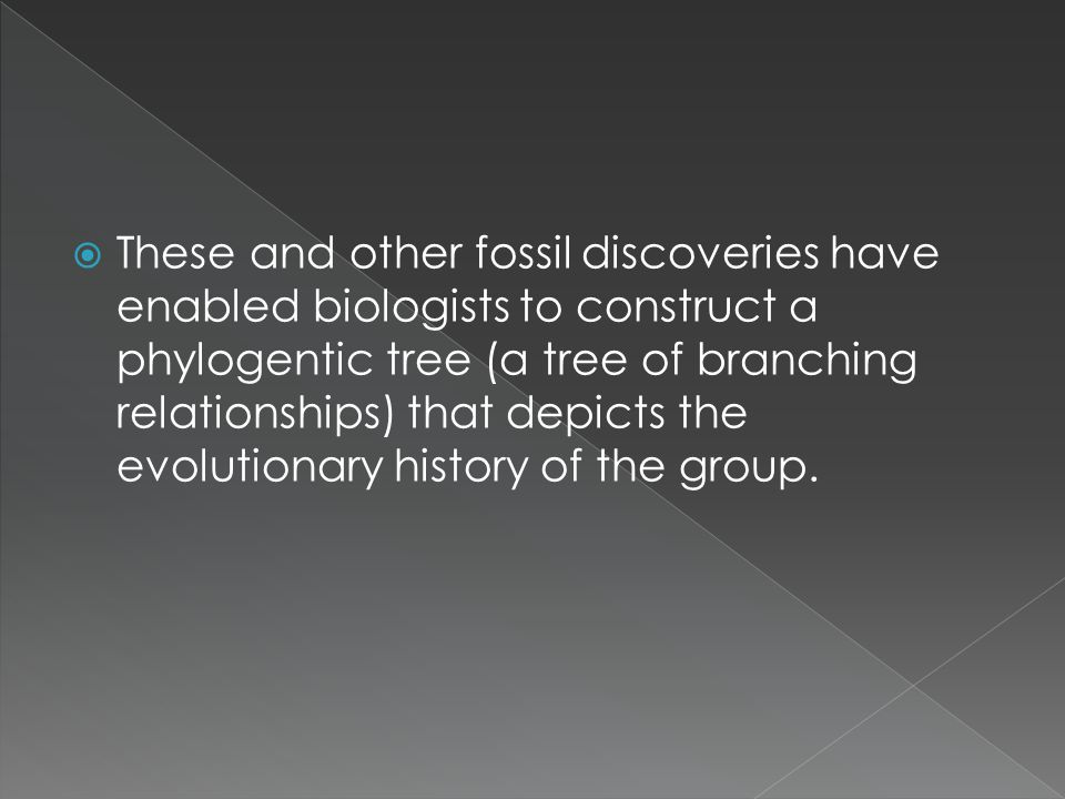 These and other fossil discoveries have enabled biologists to construct a phylogentic tree (a tree of branching relationships) that depicts the evolutionary history of the group.