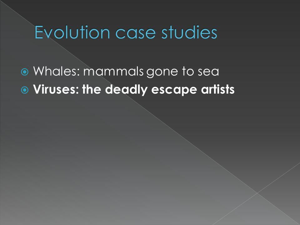 Evolution case studies