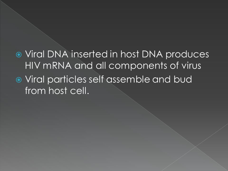 Viral DNA inserted in host DNA produces HIV mRNA and all components of virus