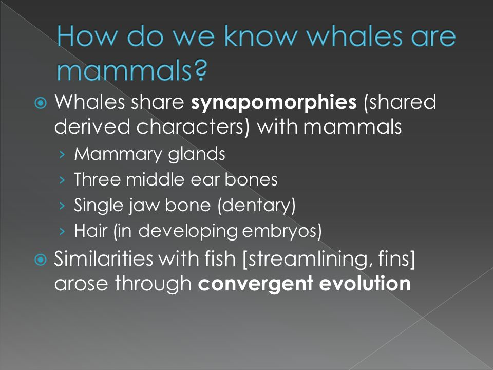 How do we know whales are mammals