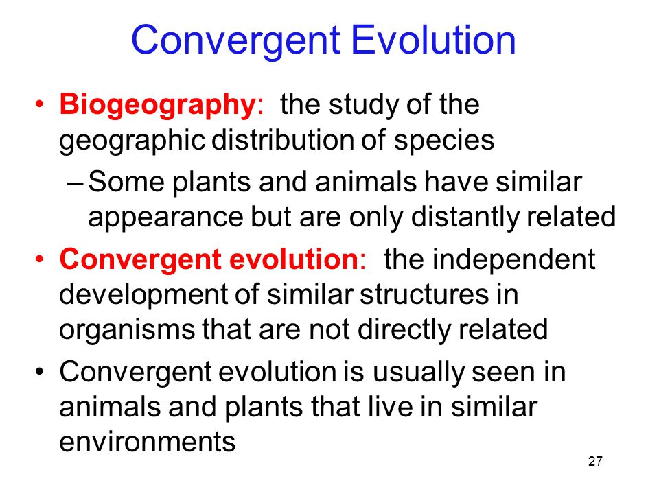 Convergent Evolution Biogeography: the study of the geographic distribution of species.