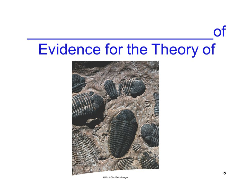 ______________________of Evidence for the Theory of Evolution