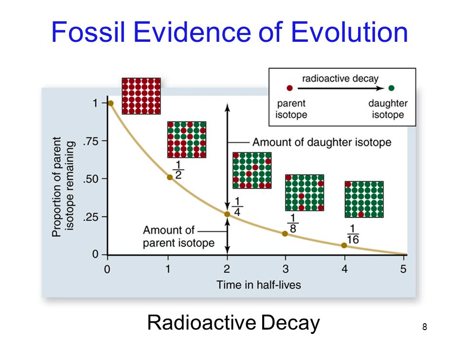 radiometric dating evidence evolution