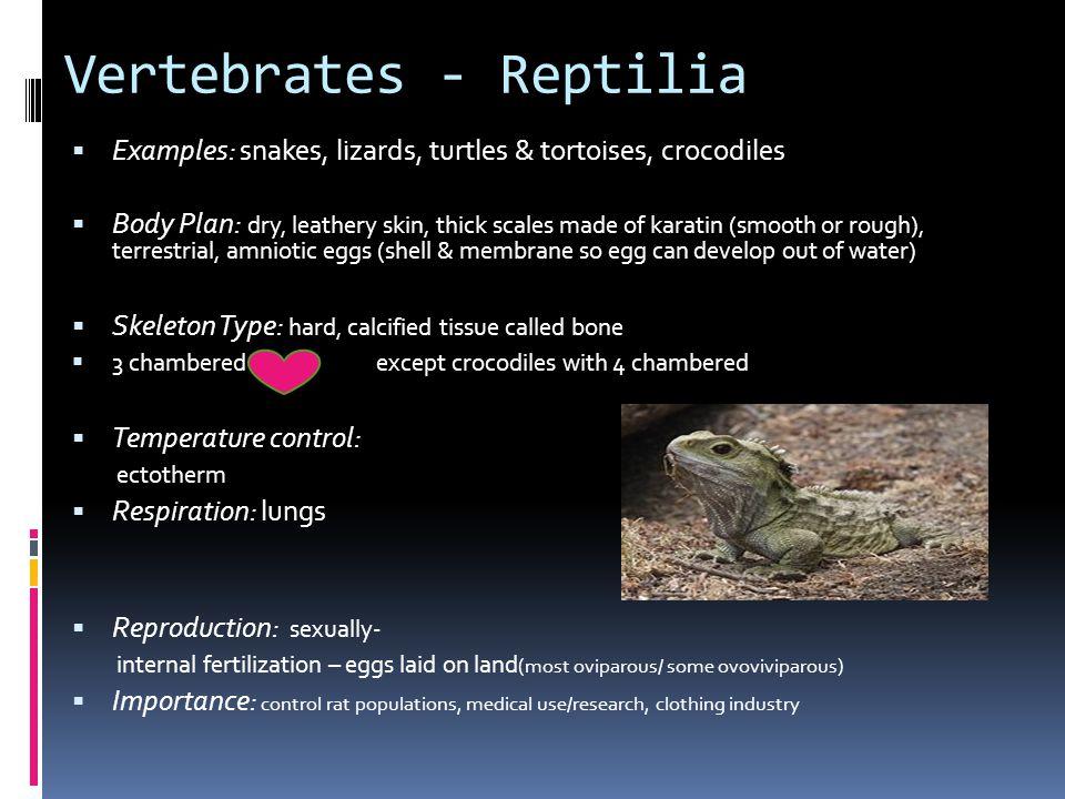 Vertebrates - Reptilia
