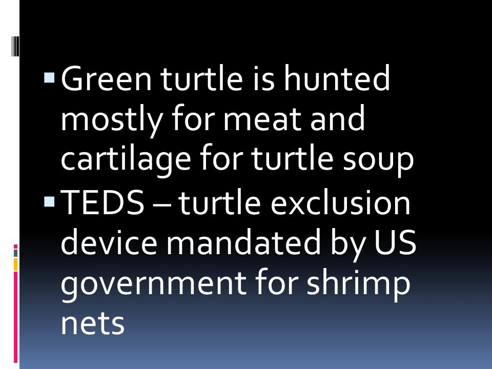 Green turtle is hunted mostly for meat and cartilage for turtle soup
