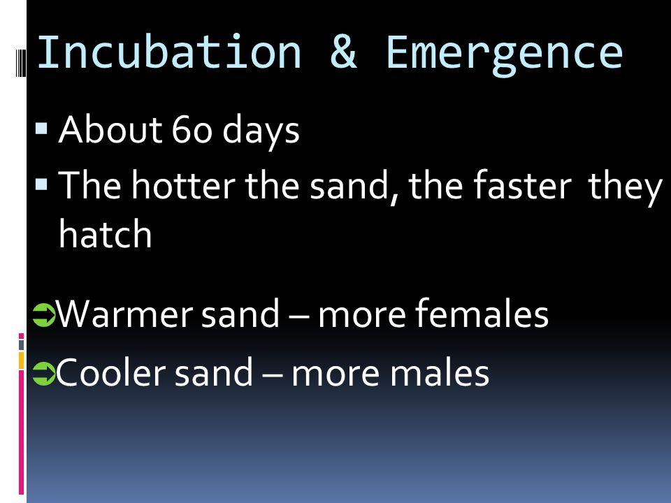 Incubation & Emergence