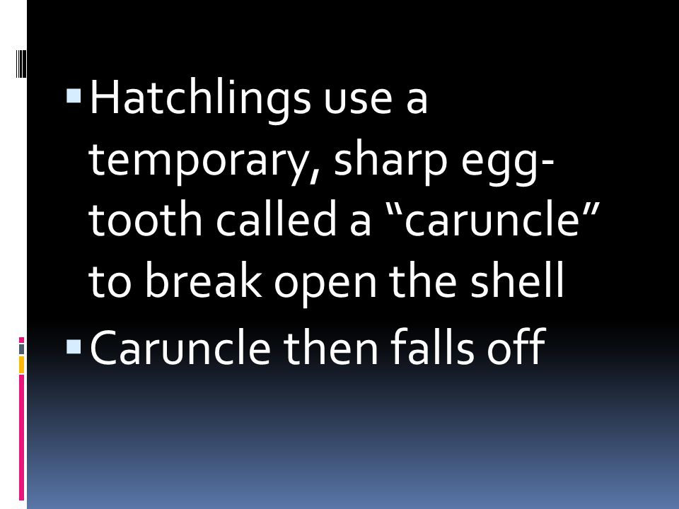 Hatchlings use a temporary, sharp egg- tooth called a caruncle to break open the shell