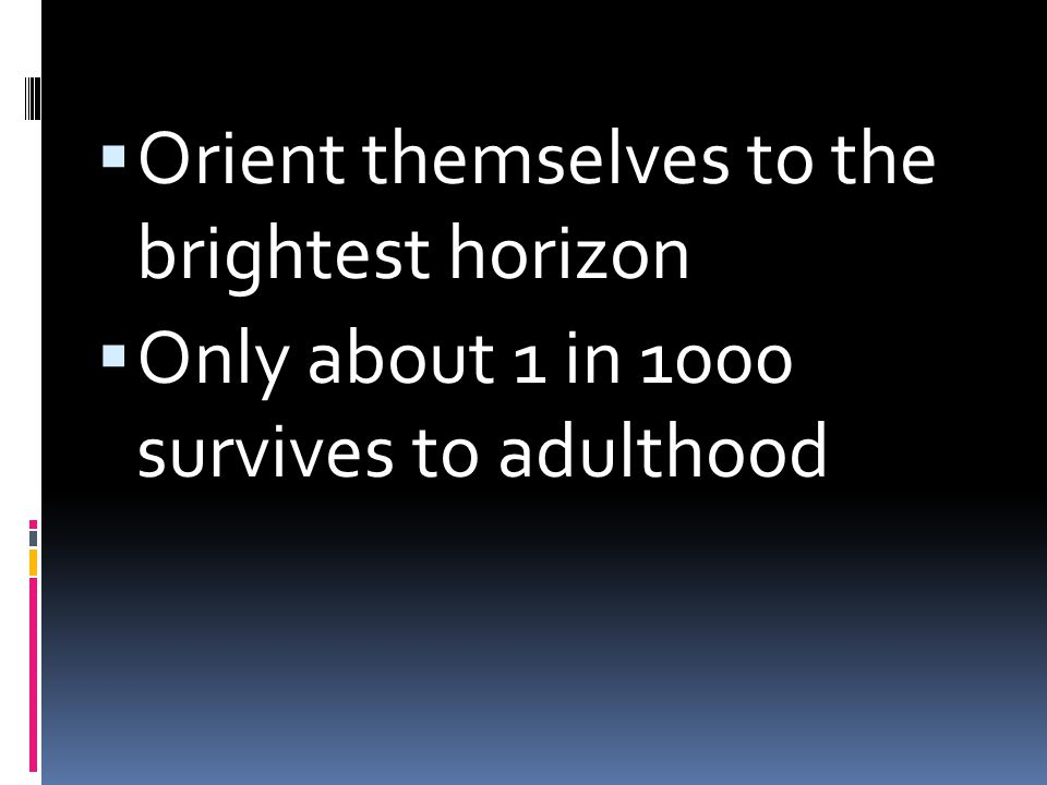 Orient themselves to the brightest horizon