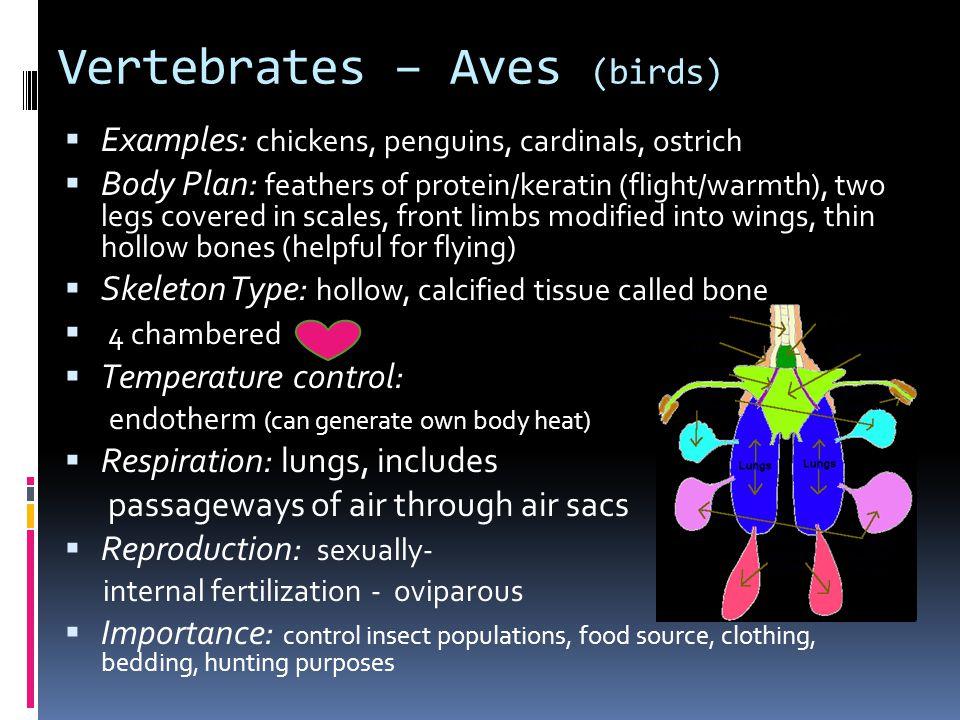 Vertebrates – Aves (birds)