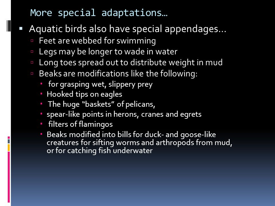 More special adaptations…