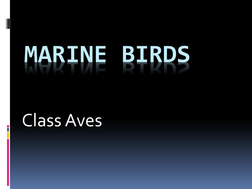Marine Birds Class Aves