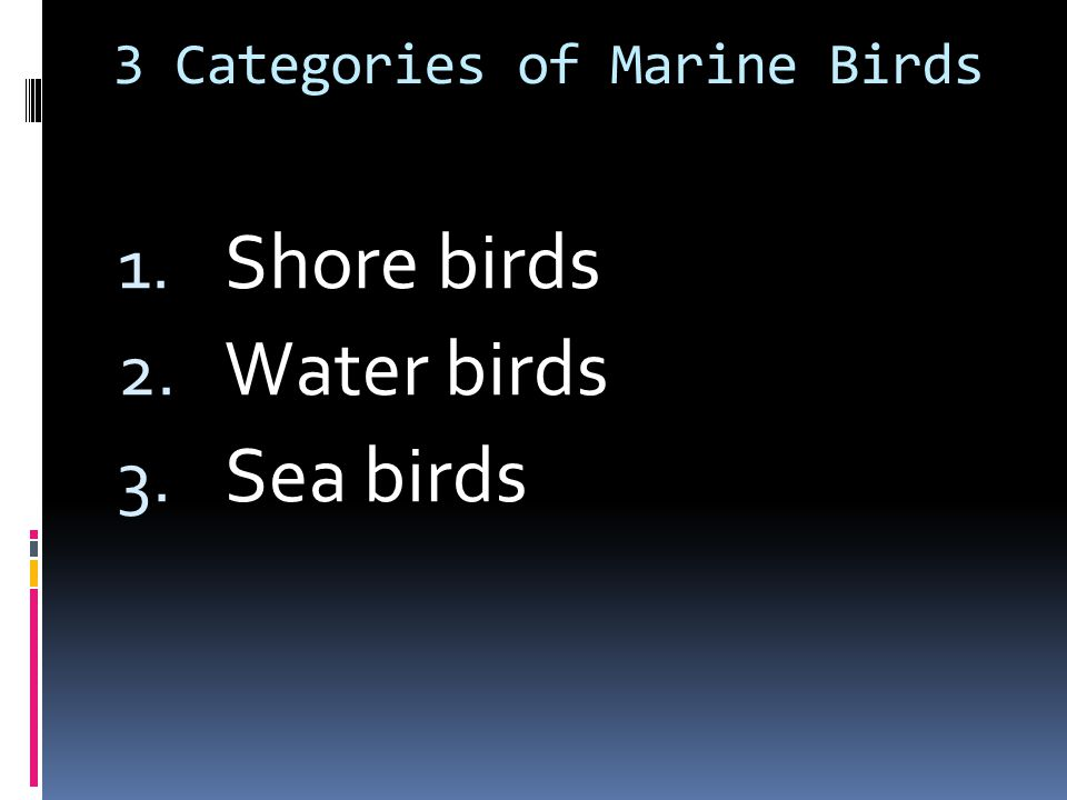 3 Categories of Marine Birds