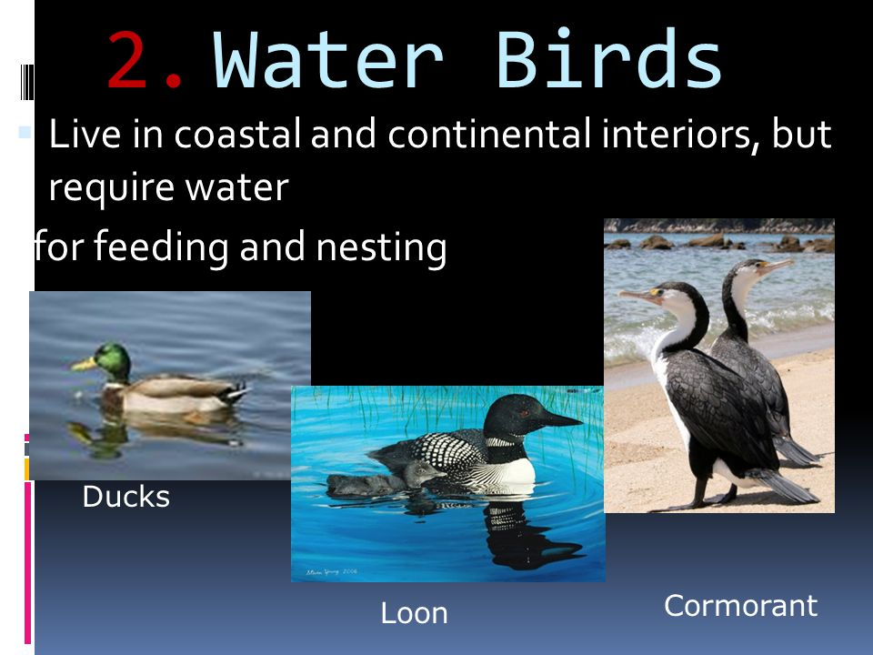Water Birds Live in coastal and continental interiors, but require water. for feeding and nesting.