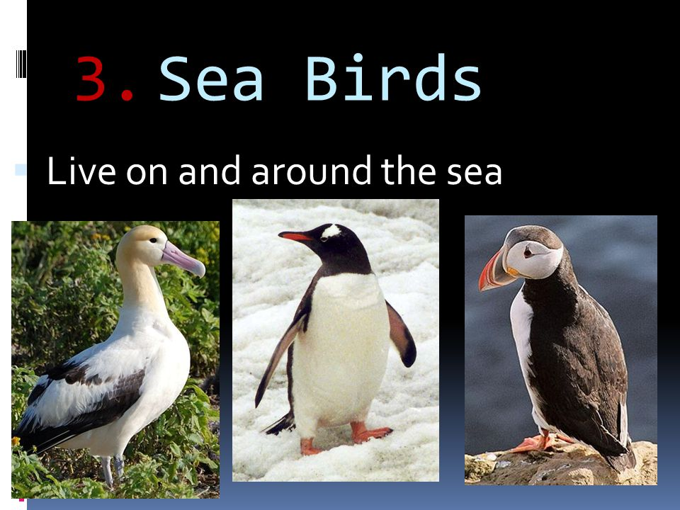 Sea Birds Live on and around the sea