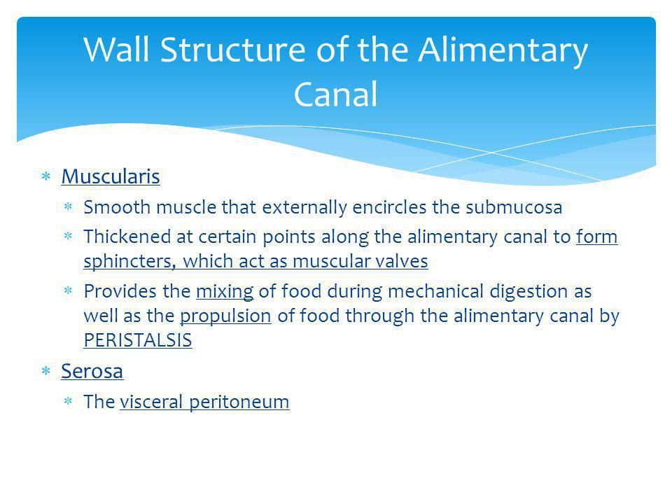 Wall Structure of the Alimentary Canal