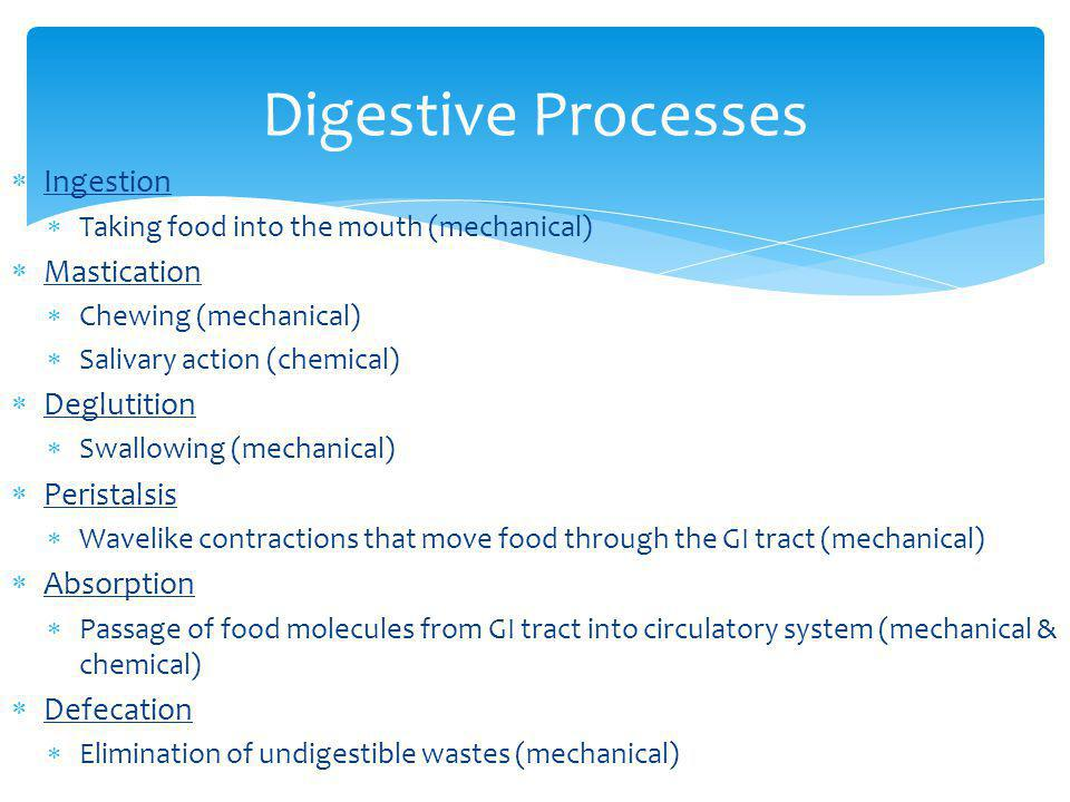 Digestive Processes Ingestion Mastication Deglutition Peristalsis