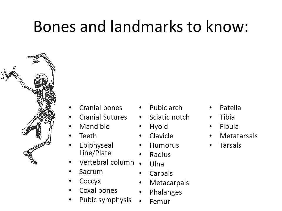 Bones and landmarks to know: